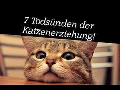 7 Todsündenden der Katzenerziehung - Katze erziehen, aber richtig! Tipps...