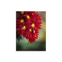Blumenbild Das Leuchten der Herbstblüten. FineArt, Kunstdruck oder Fototapet