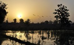 FAISALABAD: An attractive view of sunrise over the skies of the City of Textile.