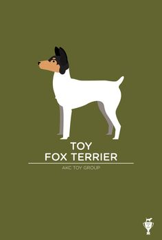 Toy Fox Terrier. I miss Piglet, but I know she is in Doggy Heaven now. <3