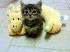 yskz: Meow http://ift.tt/1vWHbAb
