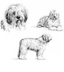Image result for old engraving old english sheepdog