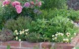 Hochbeet für Aromapflanzen