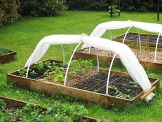 Raised Vegetable Garden Beds Can Be A Great Gardening Option Veg Garden, Vegetable Garden Design, Edible Garden, Indoor Garden, Vegetable Gardening, Permaculture, Cold Frame, Square Foot Gardening, Diy Greenhouse