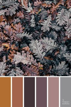 Fabulous Fall Color Palette Collection Ideas For Amazing Home Interior The Effective Pictures We Offer You About wedding color palette spring A quality picture can tell you many things. Color Schemes Colour Palettes, Fall Color Palette, Colour Pallette, Color Palate, Color Combos, Colour Board, Color Swatches, Bedroom Colors, Pantone Color