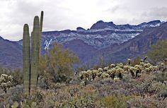 Winter, #peralta Trail, #Goldcanyon, AZ #ArizonaAmber  Visit me at www.ArizonaAmber.com