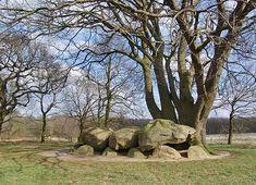 Dolmen/Hunebed D21 - Bronneger (Borger), the Netherlands
