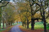 Picturesque Cotswolds-Autumn