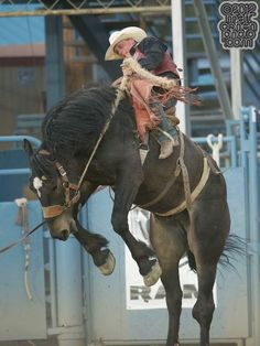 1000 Images About Rodeo Cowboys On Pinterest Bull
