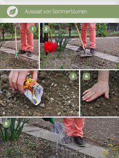 Tomaten Pflanzen: Tipps Zum Anbau Und Den Besten Sorten | Garten ... Tomaten Balkon Pflanzen Tipps