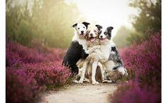 heart-warming-dog-photos16