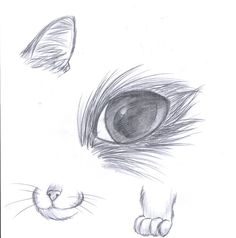 How to draw a cat by ~1PencilBurner on deviantART
