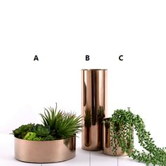 Gorgeous Luxry Metal Rose Gold Vase Flower Pot