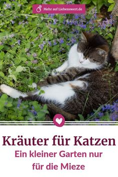 Herbs for cats: a small garden just for the kitty-Kräuter für Katzen: Ein kleiner Garten nur für die Mieze In addition to catnip, there are other herbs for cats that taste and do them good. Gardening Photography, Wildlife Photography, Cat Plants, Garden Plants, Gato Animal, Gatos Cats, Garden Trees, Cat Tattoo, Cool Eyes
