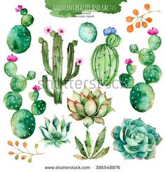 Set Of High Quality Hand Painted Watercolor Elements For Your Design With Succulent Plants, Cactus And More. Stock Illustration – Illustration of arizona, elements: 67798518 Cactus Painting, Cactus Art, Cactus Plants, Painting & Drawing, Succulent Plants, Indoor Cactus, Cacti, Watercolor Succulents, Watercolor Cactus