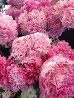 lovely pink blooms. peonies?