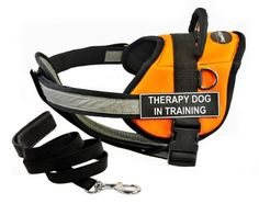 """Dean & Tyler's DT Works Orange """"THERAPY DOG IN TRAINING """" Harness with Chest Padding, Large, and Black 6 ft Padded Puppy Leash."""