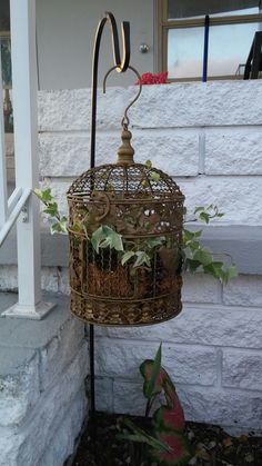 Flea market bird cage find . planted with English Ivy and hung. Great addition in my garden.