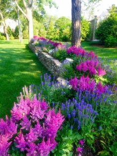 fleurs en rose et bleu, massif de fleurs, bordure fleurie aux couleurs bleu et violet, pelouse verte