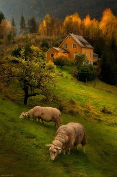 House behind nature..the farm animals are grazing