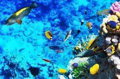 Mar Rojo y tour en Hurgada a las playas del mar Rojo y poseo por el mar Rojo en Egipto #Hurgada #paquete_de_viaje_Egipto http://worldtouradvice.com/spanish/egipto-paquetes-de-viajes.html