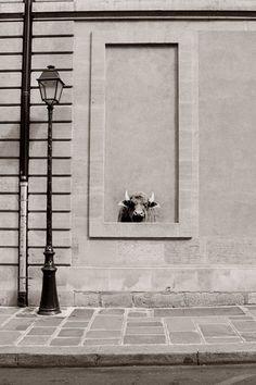 © Sophie Photographe - Buffle - Rue des 4 fils 75003 Paris. street art 000