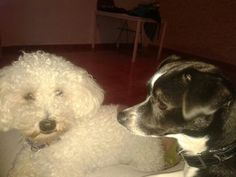 Home.Family Tenerife, Dogs, Animals, Animales, Animaux, Teneriffe, Animal Memes, Animal, Pet Dogs