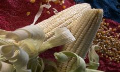 Corn On The Cob – Saturday's Cookout Daily Jigsaw Puzzle