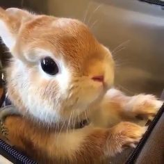 Cute Bunny and rabbits - Rodrigaa - Make your Day! Cute Bunny and rabbits Must Watch and Make your Day! Cute Bunny and rabbits - Baby Animals Super Cute, Cute Baby Bunnies, Cute Little Animals, Cute Funny Animals, Cute Cats, Cute Animal Videos, Cute Animal Pictures, Fluffy Animals, Animals And Pets
