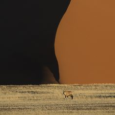 Oryx,and sand dune, Namibia,desert, Philippe Destine    Oryx and Sand Dune - Deadvlei, Namibia – Philippe Destine  Philippe is an amazing photographer from Franc