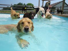 dog pool party, dog pool pawty, lucky puppy (9)