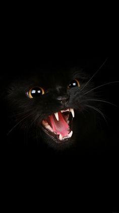 Black Cat Roar Android wallpaper thumbnail