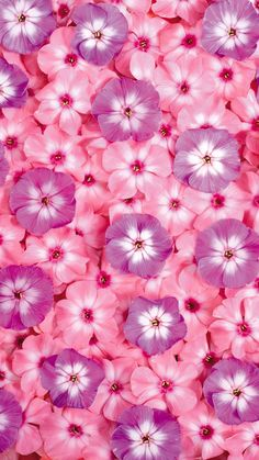 pink, petal, flower, lilac, purple, plant, iphone wallpaper