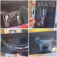 for vet dramatic play:  make your own xrays-chalk drawings on black construction paper & laminate