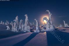 Riisitunturin aamu - Riisitunturi Riisitunturin kansallispuisto Posio luonnonsuojelualue luontokohde retkikohde talvi talviaamu talvinen luminen tunturimaisema Lapin-maisema Lappi kuu kuunlasku kuutamo kuunvalo laskeva tykkymaisema tykky tykkyilmiö lumi huurre metsä Nature Pictures, Cool Pictures, Lapland Finland, Night Photos, Winter Beauty, Amazing Nature, Great Photos, Moonlight, Natural Beauty