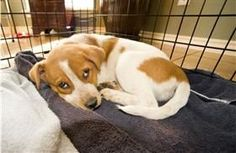 Puppy crate-training tips - these will come in handy in December. :)