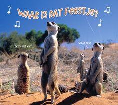 gefeliciteerd man - Google zoeken Happy Birthday Wishes, Kangaroo, Cards, Poster, Animals, Google, Celebration, Quotes, Baby Bjorn