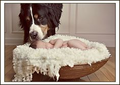 Art babies and dogs newborn-photography-tips-inspiration