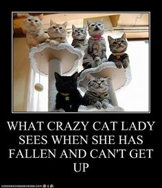 WHAT CRAZY CAT LADY SEES WHEN SHE HAS FALLEN AND CAN'T GET UP - Cheezburger