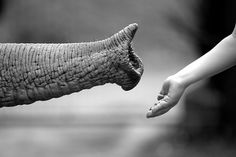 animal, animals, black and white, child, conceptual, cute, elephant, food, friend, friends, friendship, hand, human, kid, luisa mantero, nose, photo, photography
