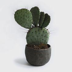 Pilar Wiley - small meteor planter