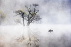 Photo Swim in the Dreamland by jae youn ,Ryu on 500px