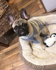 Made to order Dog Jumper, Dog Sweater, hand knitted in UK, with optional harness hole – Hand Knitting Pit Bulls, Dachshund, Pugs, Waterproof Dog Coats, Dog Jumpers, The Wooly, How To Start Knitting, Dog Sweaters, Whippet