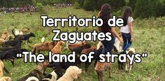 Story about visiting the Territorio de Zaguates in Costa Rica, the largest no kill dog shelter in the world. Includes information about how to visit or help