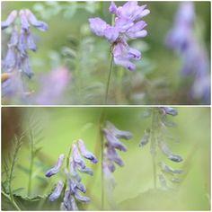 photo de fleurs en Pyrénnées  Made by Tricochette