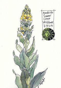 from janelafazio.com sketchbook