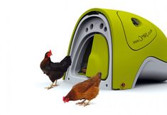 With the Omlet Eglu Urban Chicken Coop you can raise two to four hens in a small space in your backyard. One hen can lay up to 260 eggs per year. What better way to teach your kids where food comes from?
