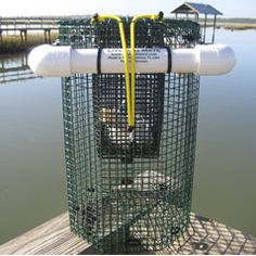 Live Bait Mate Cage, Well, Container Inshore Fishing,