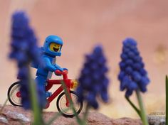 Joy in looking and comprehending is nature's most beautiful gift.  Albert Einstein . The first grape hyancinths of spring are popping up on Benny's bike ride. . #springtime #lego #legonofilterfriday #grapehyancinths #desert #toy_photographers