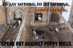 Puppy farms & back yard breeders exist in South Australia, Dogs are typically forced to live and breed in appalling conditions for the sake of profit. Mothers live in filthy pens surrounded by their own excrement. Please sign and share